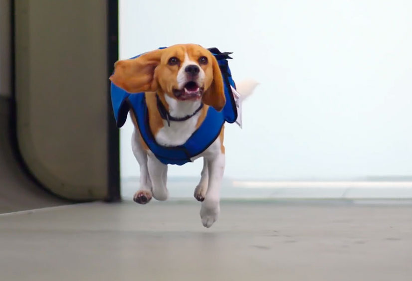 The KLM Search Dog